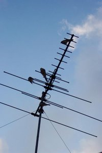 Television antenna on a rooftop